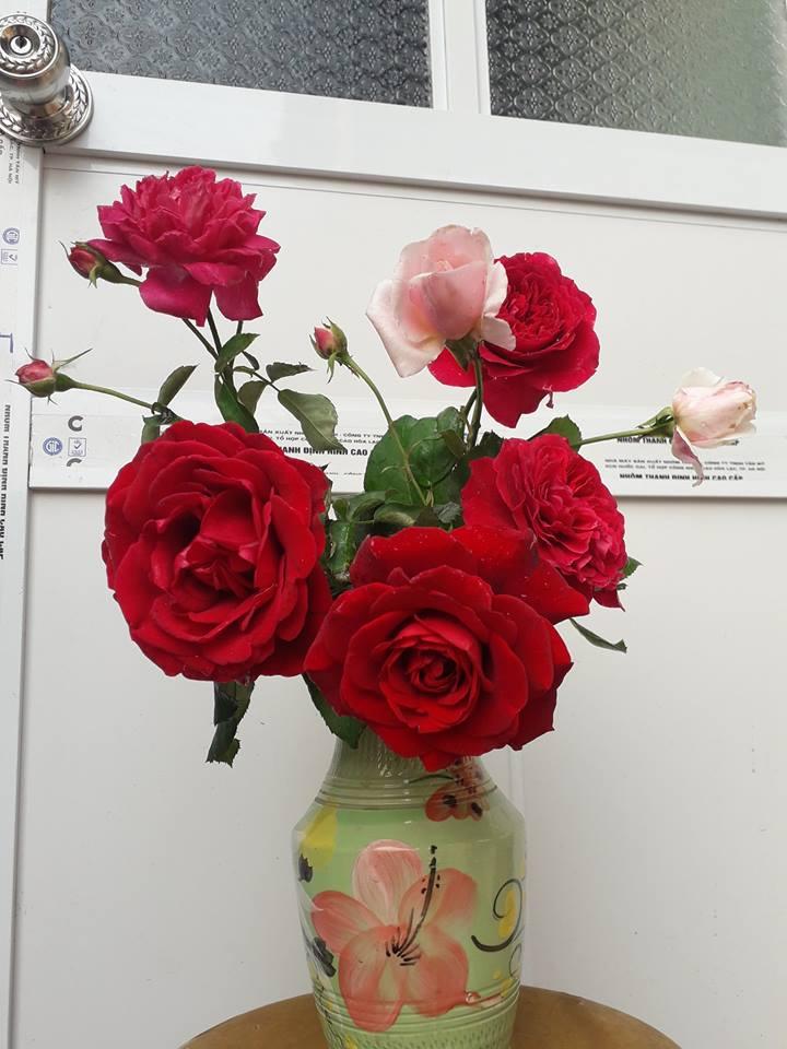 Bí quyết để giữ hoa hòng tươi lâu ngày