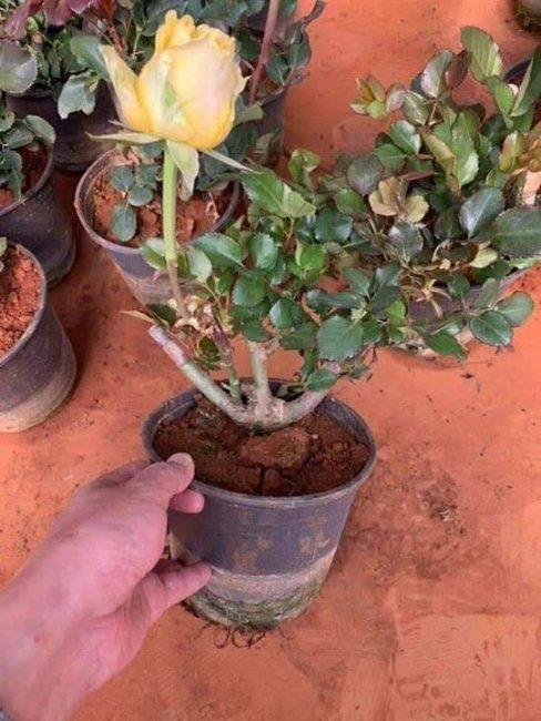 cay cho hoa sau 3 thang