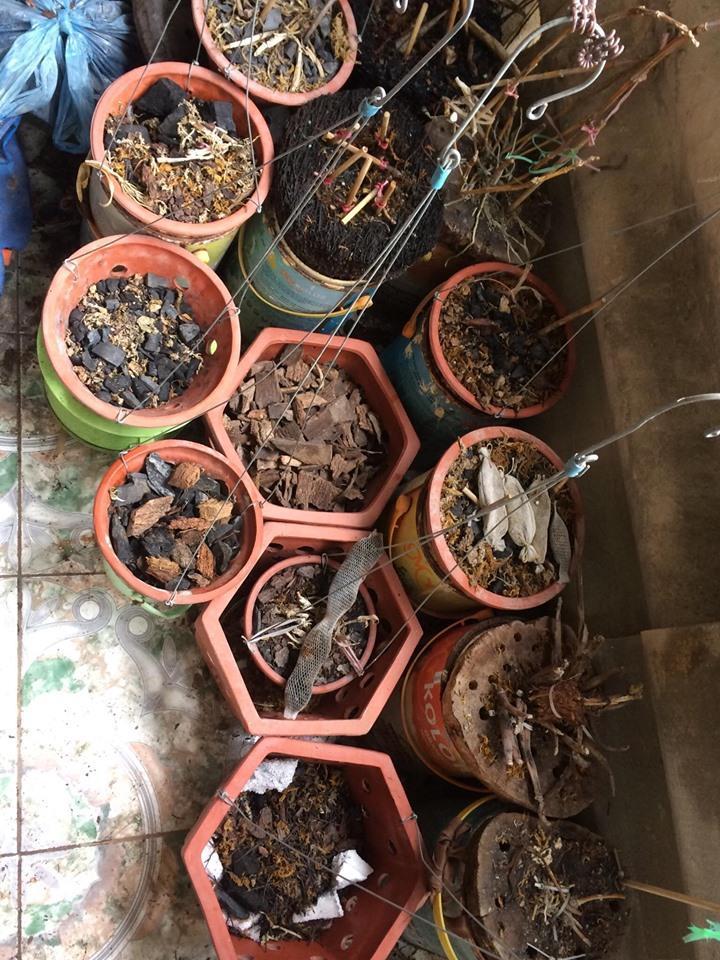 Kết quả sau 5 tháng trồng là những cái chậu mà không còn cây nào sống