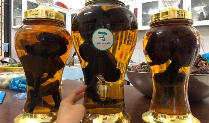 Rượu Nấm Linh Chi