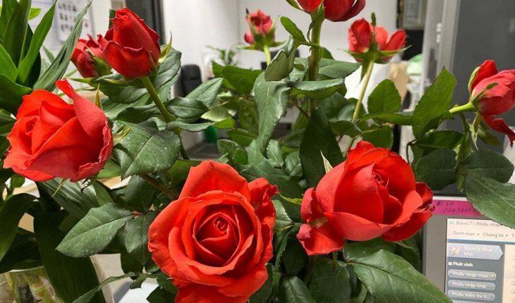 hoa hồng đẹp nhất Việt Nam