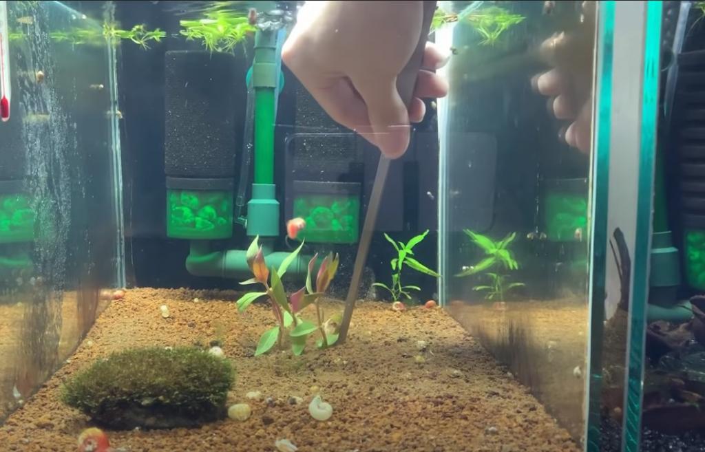 cây thủy sinh trong bể cá